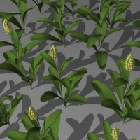 3ds max sorghum field