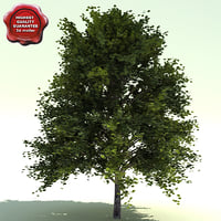 alnus rubra red alder 3d model