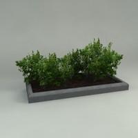 maya planter plants