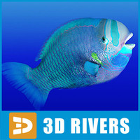 Parrotfish by 3DRivers