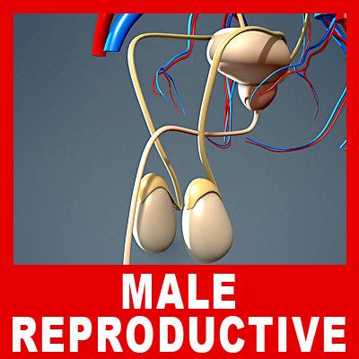 Reproductive_00.jpg