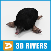 Mole by 3DRivers