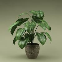 plant_0005