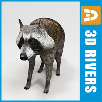 Racoon by 3DRivers