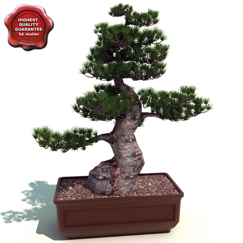 Bonsai_tree_0.jpg