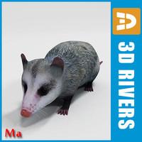 3d x opossum animals marsupials
