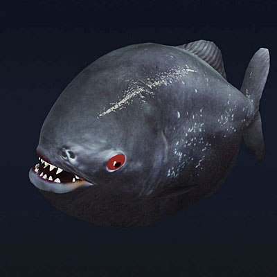 3d model aggressive piranha fish Piranha 02 by 3DRivers... by ...