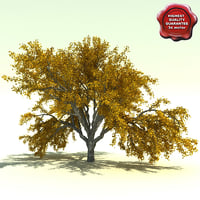 3d quercus garyana oregon white model