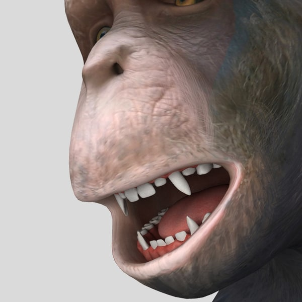 realistic chimpanzee animation teeth 3d model - Realistic Chimpanzee - with teeth... by SpinQuad1976