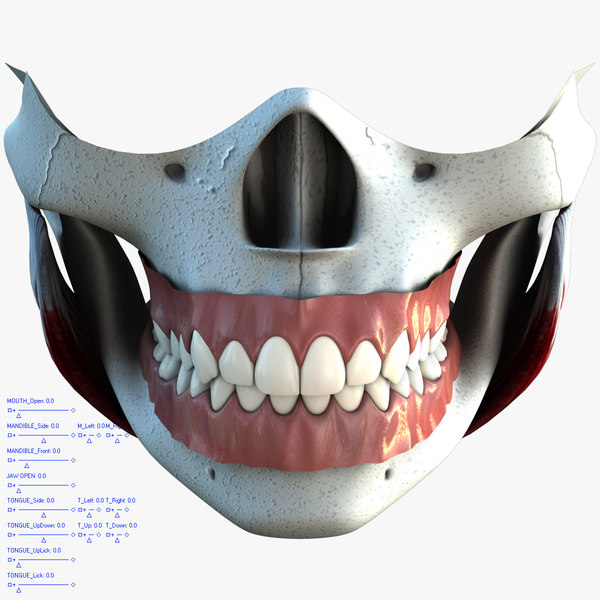 anatomical teeth tongue mouth max - mouth_v2.1.max... by Nikola Dechev