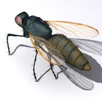 fly housefly 3d max