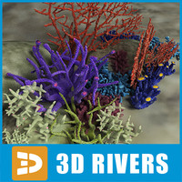 Coral set 02 by 3DRivers