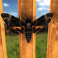 moth 3d max