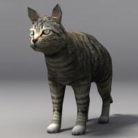 3d cat model