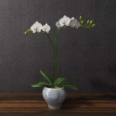orchid in blue white ceramic pot_1.jpg