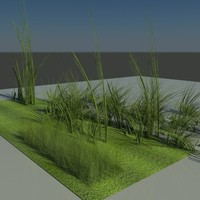 physical green grass 3d max