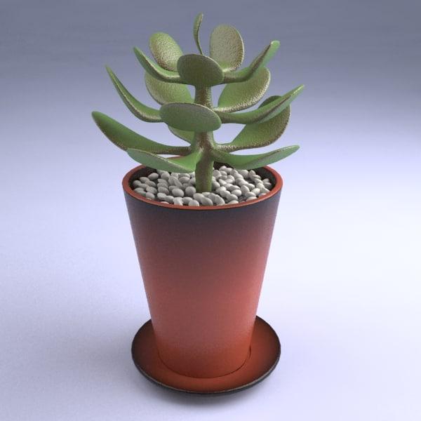 small_succulent_plant.rar