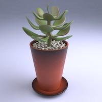 3d model small succulent plant