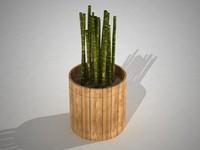 Maset of Bamboo o maseta de bamboo