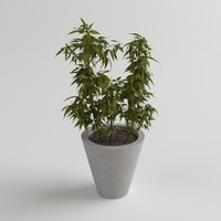 3d plant potted