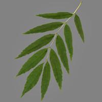lwo elm leaf