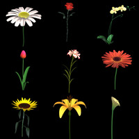 flowers lily lwo
