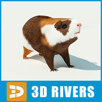 Guinea pig by 3DRivers