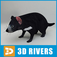 Tasmanian devil by 3DRivers