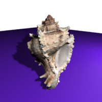 Seashell HighPoly