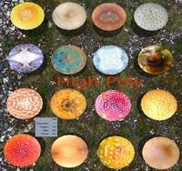 Ultimate Mushroom Pack-Style1