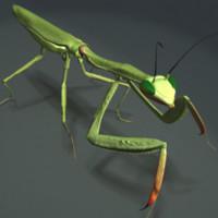 3d model mantis