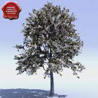 cornus eddie white wonder 3d model