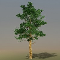 3d model trees pinus