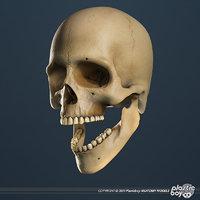Human Skull - TEXTURED