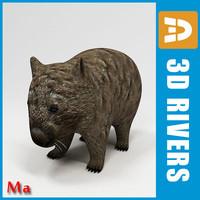 3dsmax wombat animals marsupials