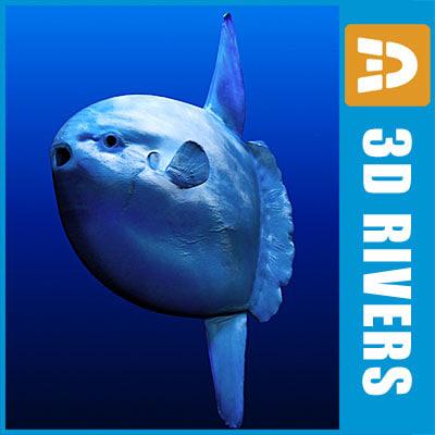 Ocean-Sunfish_logo.jpg