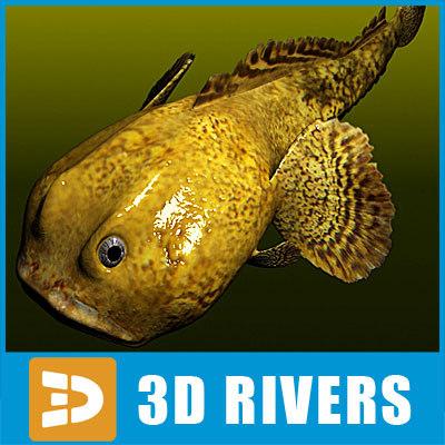 Oyster-Toadfish_logo.jpg