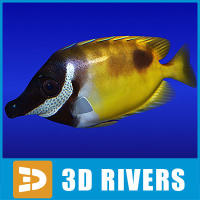 RabbitFish_logo.jpg