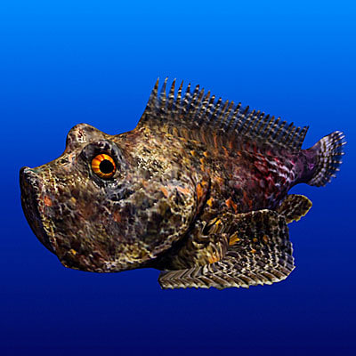 Stonefish fish 3d max for Stone fish facts