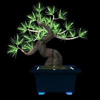 bonsai plant 3d model