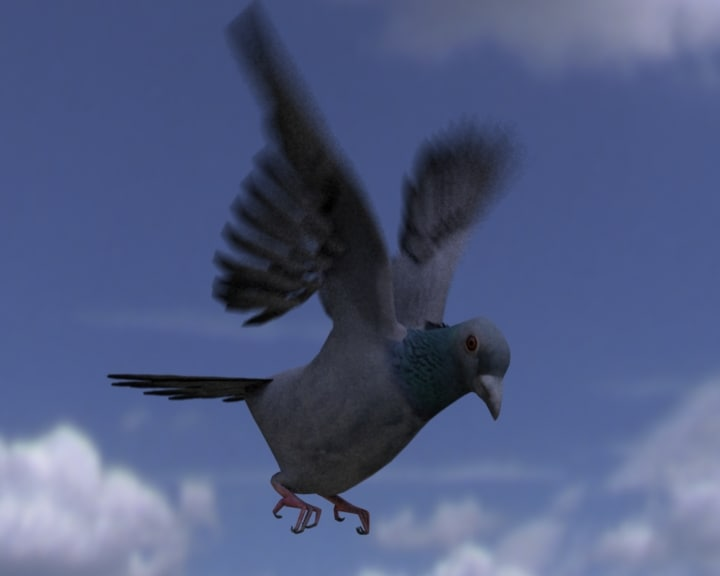 pigeon_m.jpg