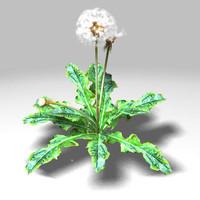 dandelion wind lwo