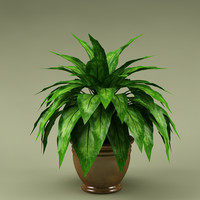 plant with flowerpot_19