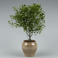 plant with flowerpot_20