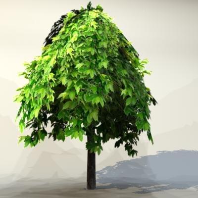 Tree_024_1.jpg