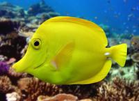 3d fish 01