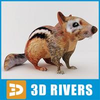 3d model cute chipmunk animals