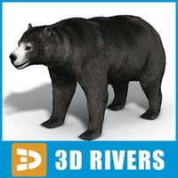 amphicyonidae bear 3d model