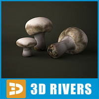 Button mushroom by 3DRivers