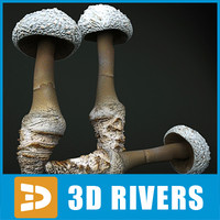Cokers Amanita by 3DRivers